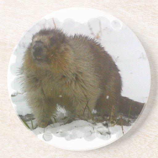 Classic Beavers Coaster