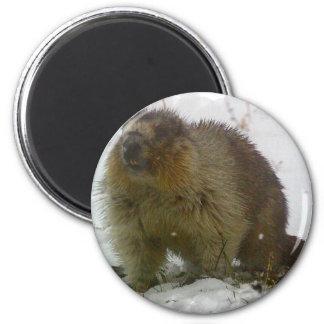 Classic Beavers Magnet Fridge Magnets