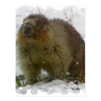 Classic Beavers Postcard