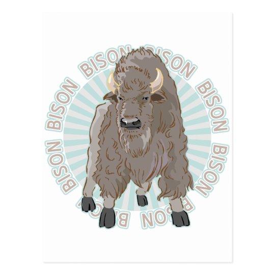 Classic Bison Postcard