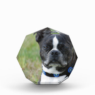 Classic Boston Terrier Dog Acrylic Award