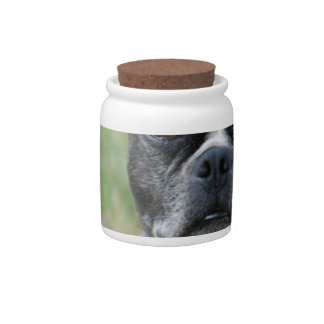 Classic Boston Terrier Dog Candy Dish