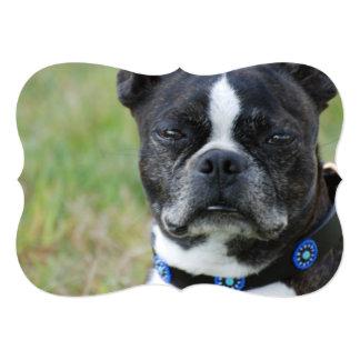 Classic Boston Terrier Dog Card