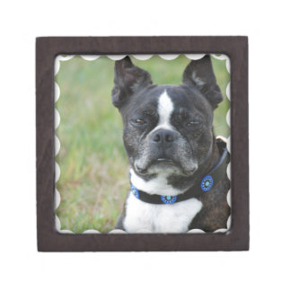 Classic Boston Terrier Dog Jewelry Box