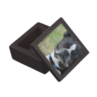 Classic Boston Terrier Dog Keepsake Box