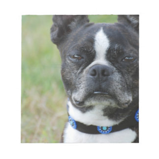 Classic Boston Terrier Dog Notepad