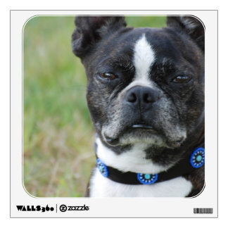 Classic Boston Terrier Dog Wall Decal