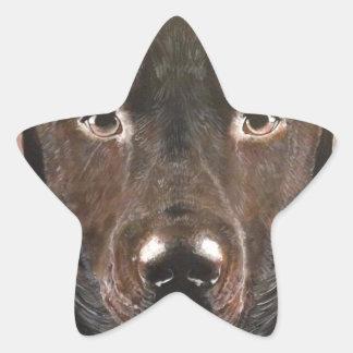 Classic Chocolate Labrador Star Sticker