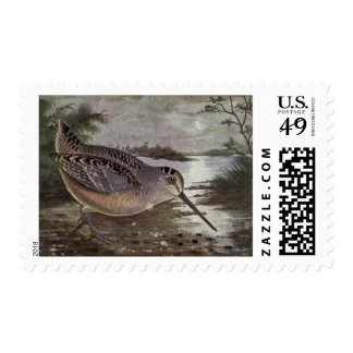 Classic Drawing of an Woodcock Postage Stamp