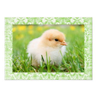 """Classic Easter Chick Greetings 5"""" X 7"""" Invitation Card"""