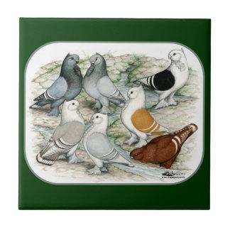Classic Frill Barred Pigeons Tile