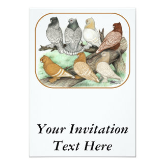 Classic Frill Pigeons Blondinettes Card