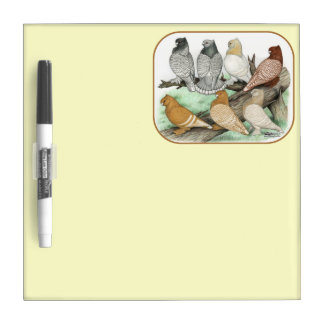 Classic Frill Pigeons Blondinettes Dry Erase Whiteboard
