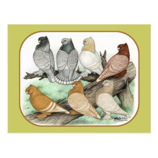 Classic Frill Pigeons Blondinettes Postcard