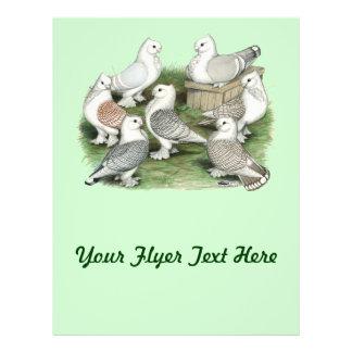 Classic Frill Pigeons Custom Flyer