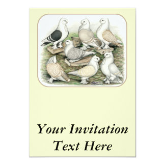 Classic Frill Pigeons Satinettes Card