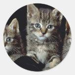 Classic Kittens Sticker