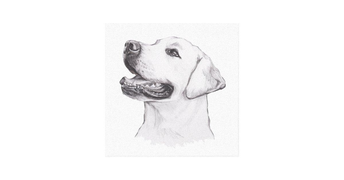 Classic Labrador Retriever Dog Profile Drawing Canvas Print Zazzle Com