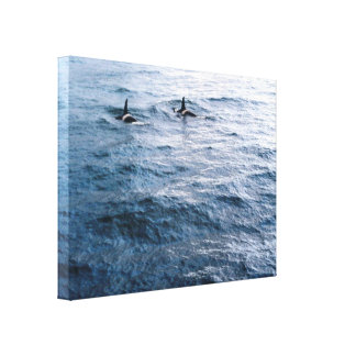 Classic Orca Whale Pair Ocean Scene Photo Designed Canvas Print