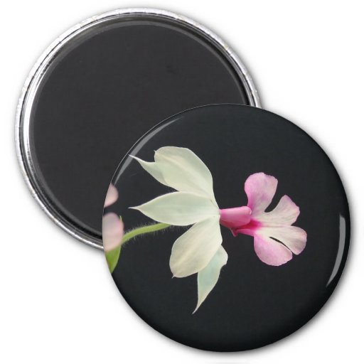 Classic Orchid Magnet