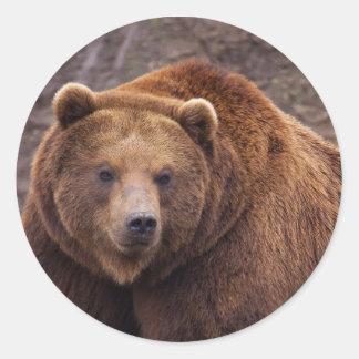 Classic Round Sticker, Glossy Brown Bear Classic Round Sticker