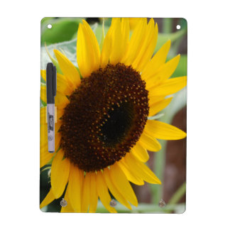 Classic Sunflower Dry Erase Boards