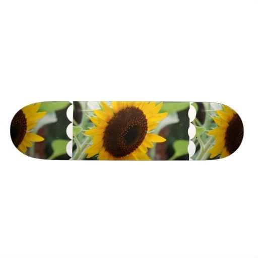 Classic Sunflower Skateboard Decks