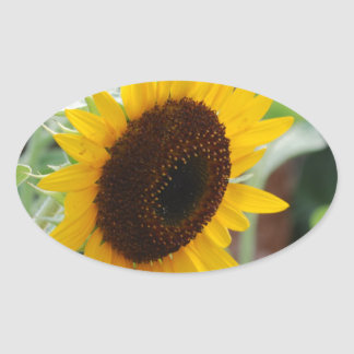 Classic Sunflower Oval Sticker