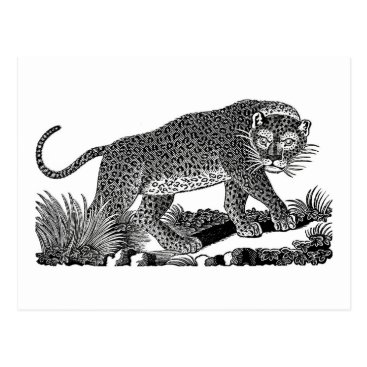 USA Themed Classic Victorian Etching  - Leopard Postcard