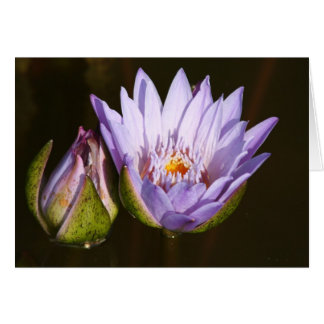 Classic Water Lily Card