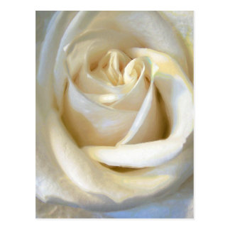"""""""Classic White"""" Series Floral Postcard"""