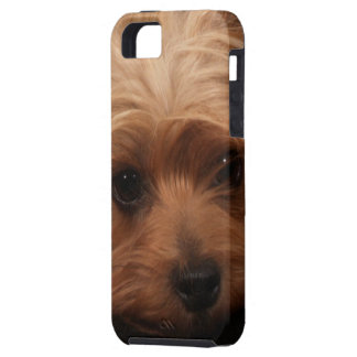 Classic Yorkie Pouty Face iPhone SE/5/5s Case