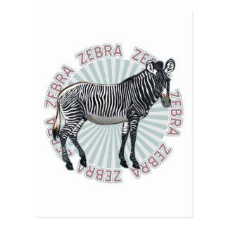 Classic Zebra Postcard