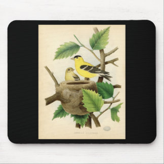 Classic Zoological Etching - American Goldfinch Mouse Pad