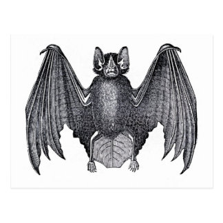 Classic Zoological Etching - Bat Postcard