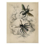 Classic Zoological Etching - Bees Poster