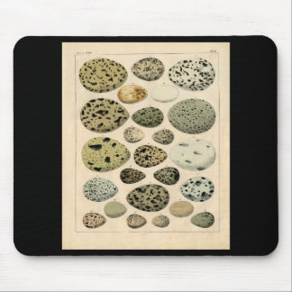 Classic Zoological Etching - Bird Eggs Mouse Pad