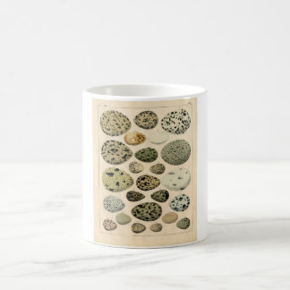 Classic Zoological Etching - Bird Eggs Classic White Coffee Mug