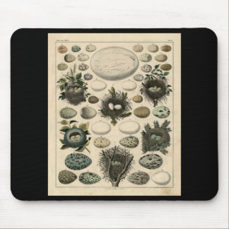 Classic Zoological Etching - Bird Nests & Eggs Mouse Pad