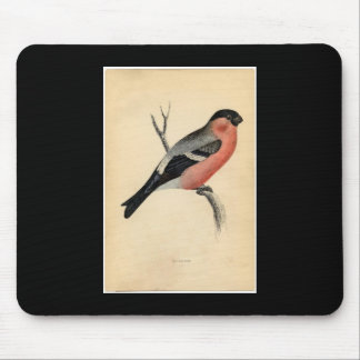 Classic Zoological Etching - Bullfinch Mouse Pad