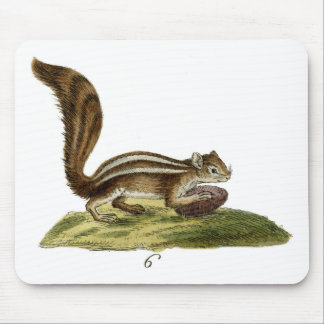 Classic Zoological Etching - Chipmunk Mouse Pad