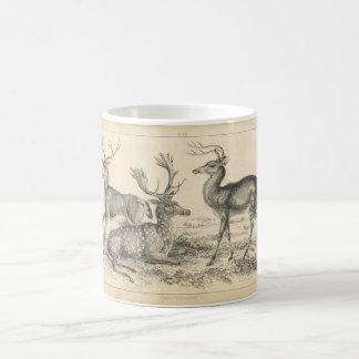 Classic Zoological Etching - Deer Classic White Coffee Mug