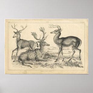 Hipster Deer Art Wall Décor Zazzle