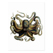 Classic Zoological Etching - Grumpy Octopus Postcard