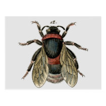Classic Zoological Etching of a Bumble Bee Postcard