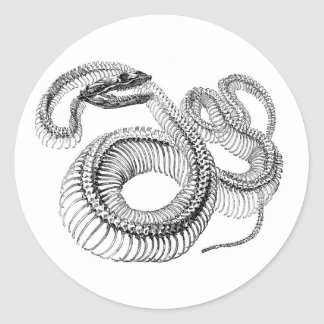 Classic Zoological Etching - Snake Skelton Classic Round Sticker