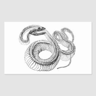 Classic Zoological Etching - Snake Skelton Rectangular Sticker