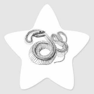 Classic Zoological Etching - Snake Skelton Star Sticker