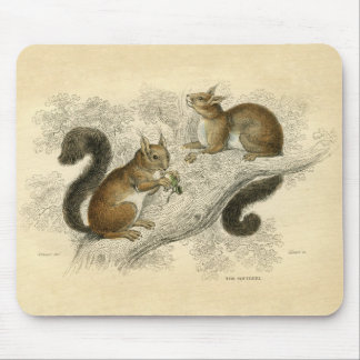Classic Zoological Etching - Squirrel Mouse Pad