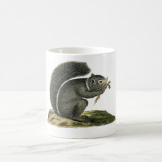 Classic Zoological Etching - Squirrel Classic White Coffee Mug